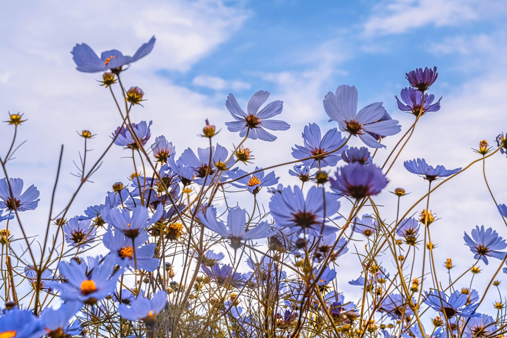 Photo by yue su on Unsplash